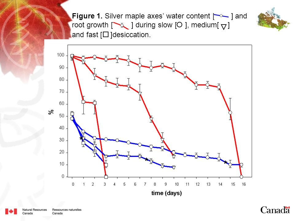 Figure 1. Silver maple axes' water content [ ] and